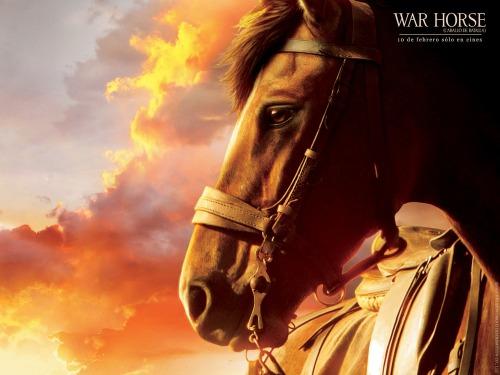 0015-war-horse-dl-wallpaper-1600x1200-2