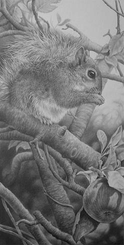 squirrelsm