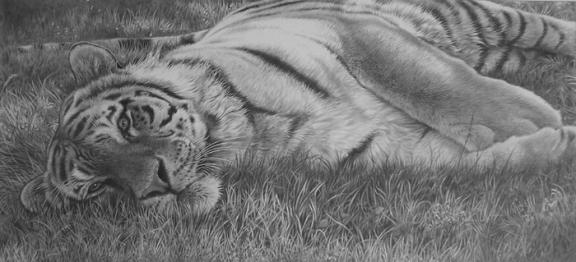 tigeringrass