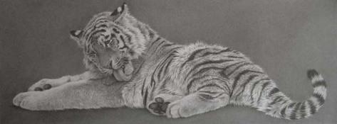 tigerwashingsm