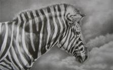 zebrasm
