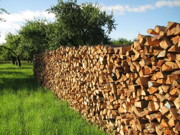 tree-wood-140567_1280